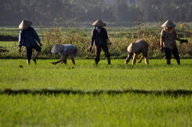 Cánh đồng trước nhà ở Hội An _Photo credited to Jean Cabane